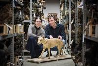 Forscher der Uni Münster entschlüsseln das Genom des Beutelwolfs