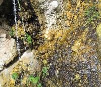 Genomstudie an Algen: Wanderer zwischen Wasser und Land