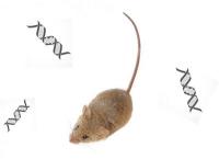 Bioinformatiker untersuchen die Geburtsstunde neuer Gene