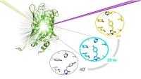"""Aufklärung der Strukturänderungen beim """"Anschalten"""" fluoreszierender Proteine"""