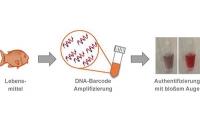 Lebensmittel im DNA-Schnelltest