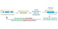 Das unterschätzte Mutationspotential der Retrogene