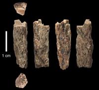 Mutter Neandertalerin, Vater Denisovaner!