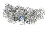 Die Covid-19-Proteine