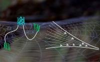 Molekulare Einblicke in Spinnenseide