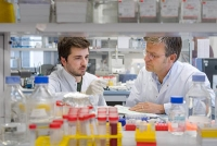 Hemmung von microRNA-29 schützt vor Herzfibrosen