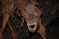 Vegetarische Höhlenbären