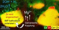 Abbau von Magnesiumlegierung auf der Nanoskala beobachtet