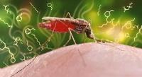 Duftstoff-Cocktail verrät Malaria
