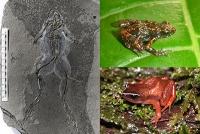 Fossilien unterstützen Artenschutz