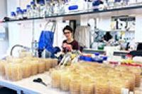 Wie Antibiotikaresistenzen dank egoistischer genetischer Elemente überdauern