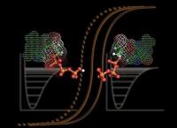 Forscher beobachten Details der Schaltung des Ras-Proteins