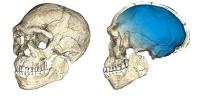 Der Homo sapiens ist älter als gedacht