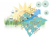 Solarer Wasserstoff: Nanostrukturierung erhöht die Effizienz von Metall-freien Photokatalysatoren um den Faktor Elf
