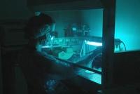 Neandertaler-Genvariante erhöht Risiko für schweren Verlauf von Covid-19