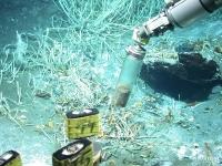Alles in einer Zelle: Die Mikrobe, die Öl in Gas umwandelt
