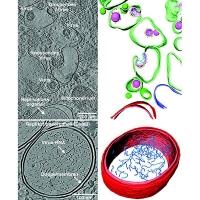 Erkenntnisse aus einer kalten Welt: Kryo-Elektronentomografie bietet Blick auf das Corona-Virus