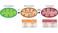 Alternativer Entstehungsprozess für Blutkrebs entschlüsselt