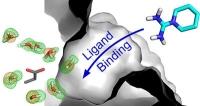 Wasser macht Platz für Komplexbildung von Proteinen