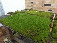 Biologische Bodenkrusten bremsen Erosion
