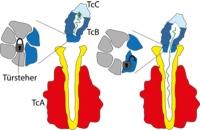 Forscher entschlüsseln Giftkomplex des Pesterregers und anderer Krankheitskeime