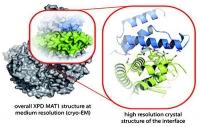 Schalter für DNA-Reparatur-Werkzeug entdeckt
