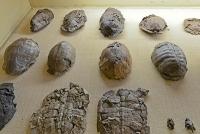 Neue Studie: Woher kommen Riesenschildkröten?