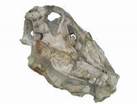 Im Kopf des Dinosauriers