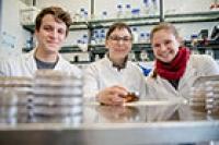 Gene identifiziert, die die Entwicklung von Pilzen steuern