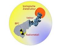 Radioaktive Metallkomplexe zur Diagnose und Therapie von Tumoren