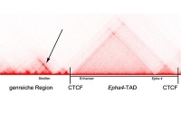 Streifen im Genom