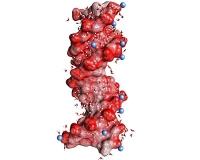Neue dynamische Sonden für Ionen in Wechselwirkung mit Biomolekülen