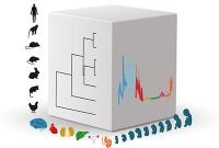 Netzwerke der Genaktivität steuern die Organentwicklung