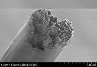 Stärkstes Biomaterial der Welt schlägt Stahl und Spinnenseide