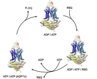 Wie resistente Keime Gift auf molekularer Ebene transportieren