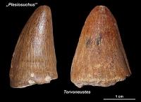 Fossiler Schatz im Naturhistorischen Museum Wien entdeckt: neue Meereskrokodile aus der frühen Kreidezeit