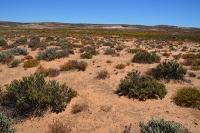 Globaler Wandel gefährdet Bodenkrusten in Trockengebieten