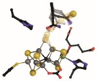 Der Nitrogenase auf der Spur