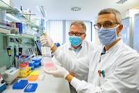 SARS-CoV-2: Wie viele neutralisierende Antikörper braucht man zum Schutz?
