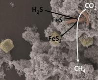 Möglicher Ur-Stoffwechsel in Bakterien entdeckt