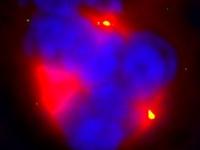 Krebsmedikament macht Zellteilung zu Zelldrittelung
