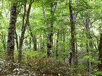 Waldökologie: Bäume 'kommunizieren' beim Wachsen mit ihren Nachbarn