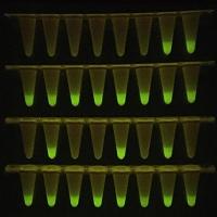 Neuartiges Covid-19-Schnelltestverfahren auf Basis innovativer DNA-Polymerasen entwickelt
