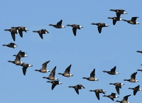 Wanderungsbewegungen werden beim Artenschutz zuwenig berücksichtigt