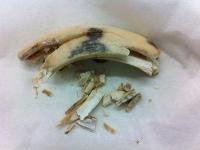 Auf den archäologischen Zahn gefühlt: genetische Spurensuche was für ein Schwein Hallstatt hatte