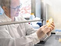 Immunsystem von Pflanzen erkennt Bakterien an kleinen Fettsäuremolekülen