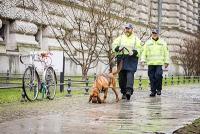 Projekt Mantrailing - Riechen Hunde DNA?