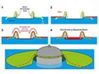 Neue Methode zur Entfernung von Öl aus Gewässern
