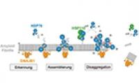 Wie molekulare Helfer Proteinverklumpungen im Zusammenhang mit Parkinson auflösen