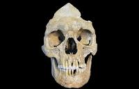 Steinzeitliches Hepatitis-B-Virus genetisch entschlüsselt